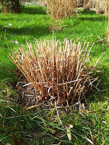 Lil'o bambous - Etape 6 - La coupe prête pour le printemps