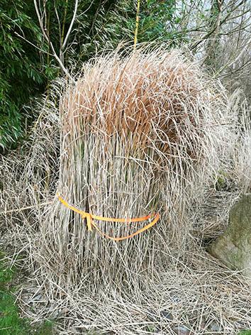 Lil'o bambous - Etape 2 - Lier les tiges ensemble