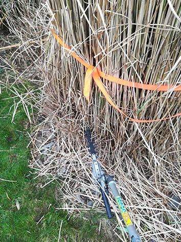 Lil'o bambous - Etape 3 - Tailler à une quinzaine de centimètre