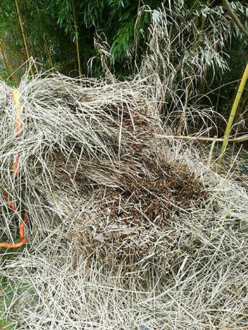 Lil'o bambous - Etape 5 - Tout est coupé