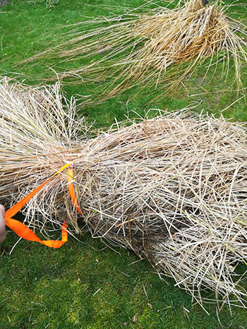 Lil'o bambous - Etape 6 - Tirez le fagot entier