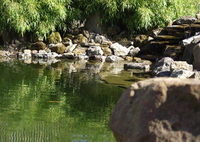 Lil'o bambous - Haie de fargesia rufa près de l'étang
