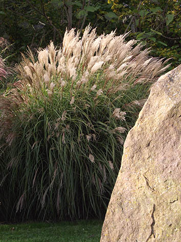 Lil'o bambous - Miscanthus kleine fontaine