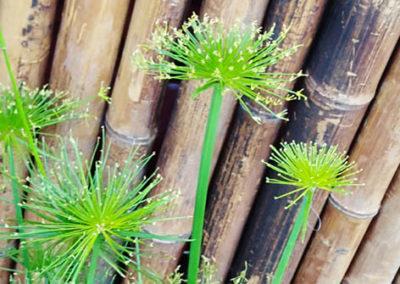 Lil'o bambous - Paravent en bambous fumé