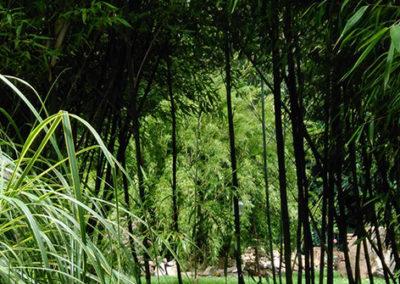 Lil'o bambous - ambiance du jardin - Ambiance dans les Phyllostachys violascens