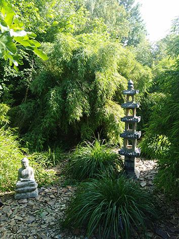 Lil'o bambous - ambiance du jardin - Fargesia utilis en arrière plan