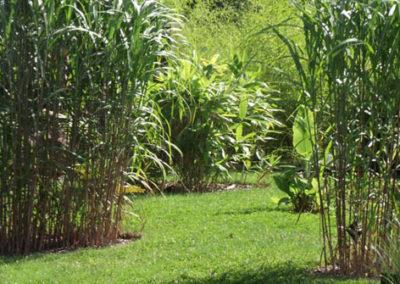 Lil'o bambous - ambiance du jardin - Graminées et bambous