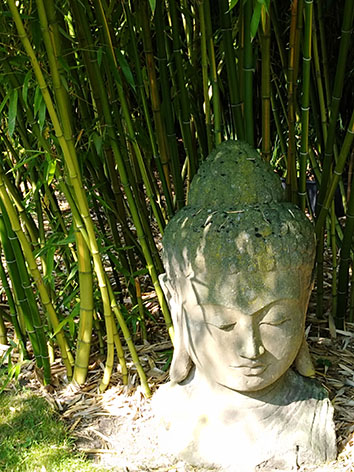 Lil'o bambous - ambiance du jardin - Grande tête de Bouddha sur fond de Phyllostachys vivax huangwenzhu