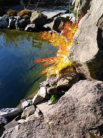 Lil'o bambous - ambiance du jardin - Magnifique couleur de fougère en automne