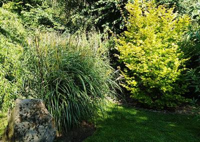 Lil'o bambous - ambiance du jardin - Miscanthus et Acer shirasawanum aureum