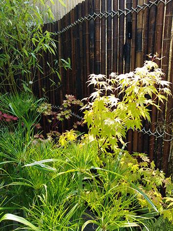 Lil'o bambous - ambiance du jardin - Paravent en bambous - Papyrus et érable japonais