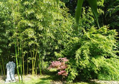 Lil'o bambous - ambiance du jardin - Phyllostachys prominens - Acer shirazz et acer palmatum