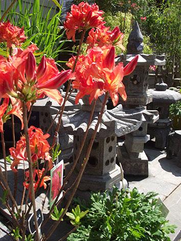 Lil'o bambous - ambiance du jardin - Plantes et pagodes