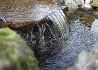 Lil'o bambous - ambiance du jardin - Sortie d'eau du lagunage