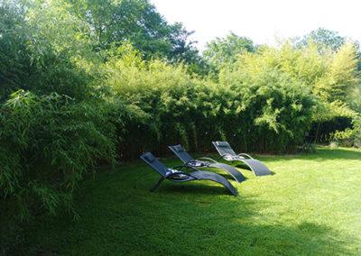 Lil'o bambous - ambiance du jardin - Très belle haie Fargesia Jiuzhaigou 1