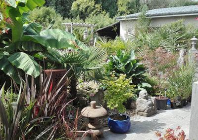 Lil'o bambous - ambiance du jardin - Vue de la cour