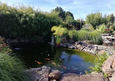 Lil'o bambous - ambiance du jardin - Vue de la pièce d'eau avec haie de Fargesia rufa, papyrus et graminées
