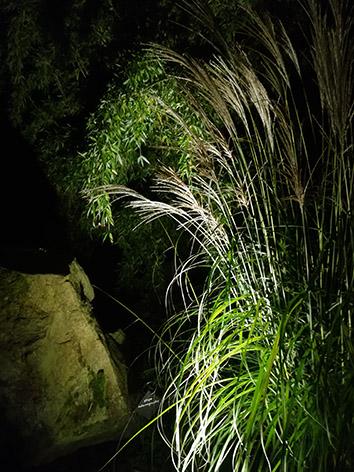 Lil'o bambous - ambiance nocturne - Fargesia et graminées